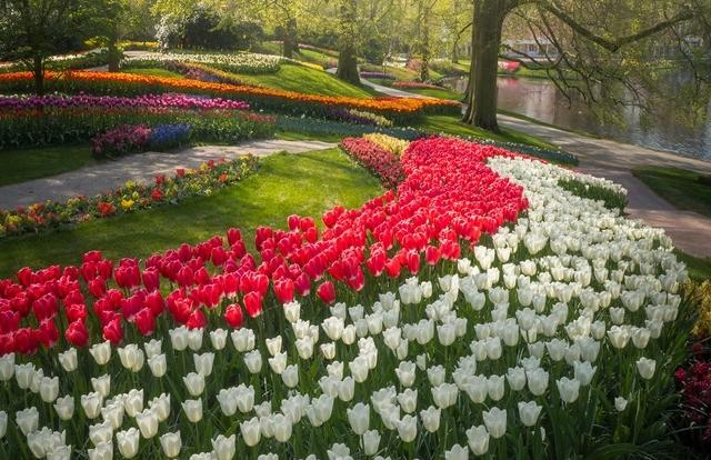 Cảnh quan lạ lẫm ở vườn hoa đẹp nhất thế giới khi… không người ghé thăm