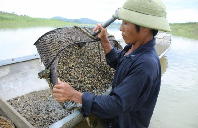 Nghề cào hến trên sông Lam