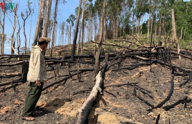 Nạn phá rừng ở Đắk Lắk diễn biến rất phức tạp
