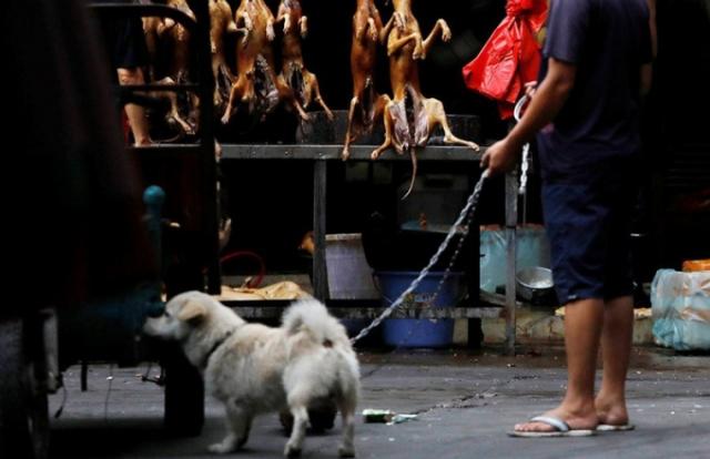 """Vì sao Lễ hội thịt chó giữa đại dịch Covid-19 của Trung Quốc bị """"ném đá""""?"""