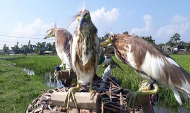 """""""Mạnh tay"""" xử lý nạn bẫy bắt chim trời"""