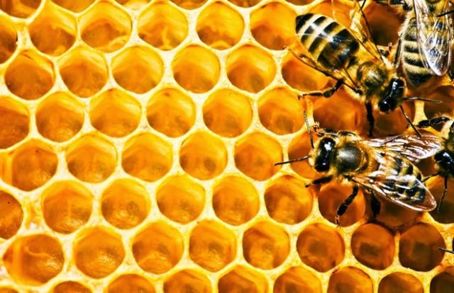 Keo ong - 6 lợi ích hàng đầu và cách dùng hiệu quả