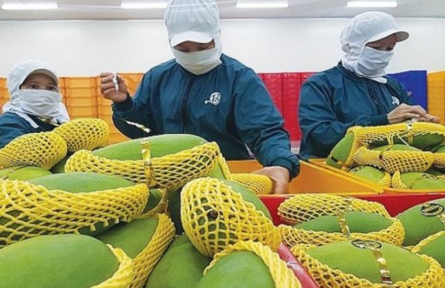 Nông sản Việt chinh phục thị trường khó tính Hoa Kỳ