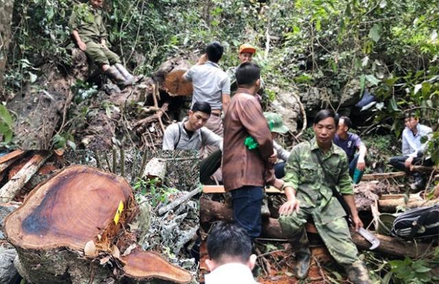 Bắc Kạn: Rừng nghiến bị tàn phá nghiêm trọng tại huyện Bạch Thông