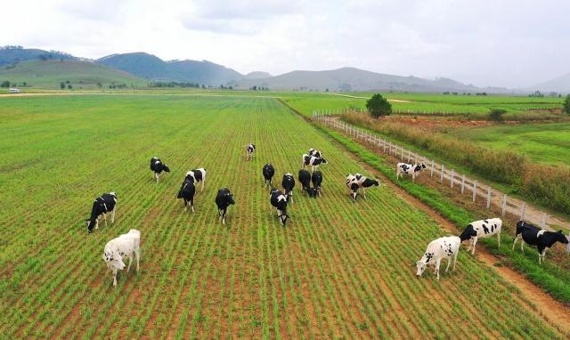 """Vinamilk liên doanh với doanh nghiệp Lào và Nhật Bản khởi công xây dựng tổ hợp """"Resort"""" bò sữa Organic quy mô 5.000ha tại Lào"""