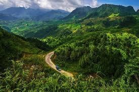 Chú trọng và phát triển bền vững rừng Tây Nguyên