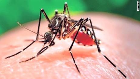 WHO: Virus Zika sẽ tiếp tục lan truyền trong thời gian tới