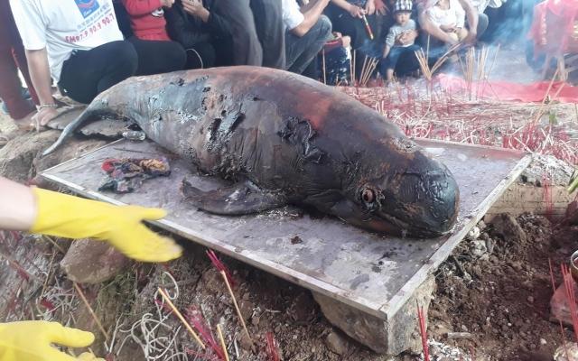Nghệ An: Ngư dân quyên góp tiền làm lễ an táng cho cá ông dạt vào cửa sông