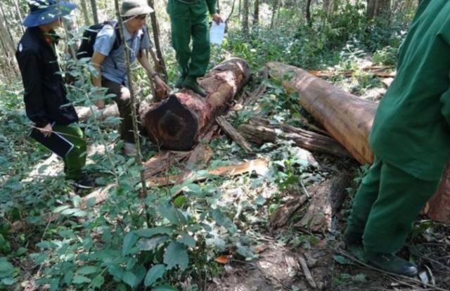 Vào khu bảo tồn Ea Sô phá rừng, 37 người ở Phú Yên dính án