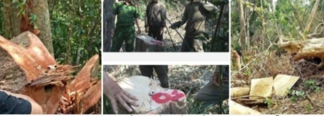 Giám đốc và 8 thuộc cấp bị truy tố vì để mất rừng gây thiệt hại gần 30 tỷ đồng.