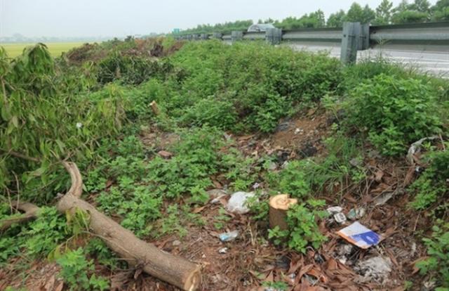 Ai ra lệnh chặt hạ hàng ngàn cây xanh hai bên cao tốc Cầu Giẽ-Ninh Bình?
