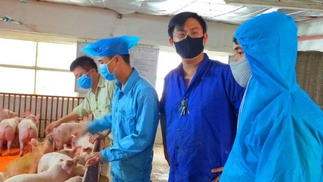 Bắt quản lý, nhân viên và bảo vệ trang trại cấu kết với nhau trộm 61 con lợn