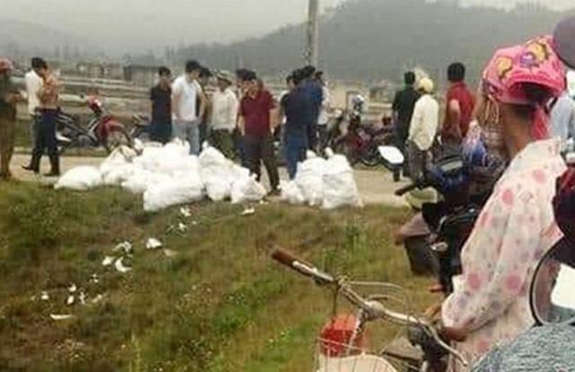Thu giữ hàng trăm kg ma túy đang trên đường vận chuyển