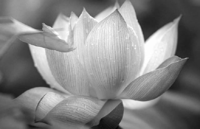 Đạo trời không thiên vị, lòng thiện cảm hóa tà ma