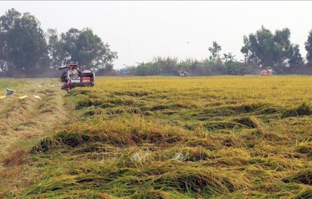 Chuyển mục đích sử dụng đất tại tỉnh Vĩnh Long và tỉnh Kiên Giang
