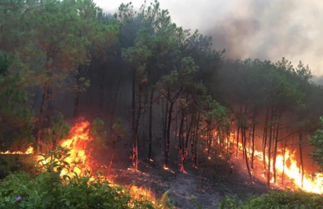 Cảnh báo nguy cơ cháy rừng tại các tỉnh Trung Bộ
