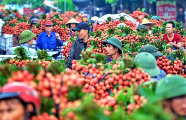 Sau vụ vải thiều thành công, Bắc Giang phấn đấu năm 2021 cán mốc 160.000 tấn