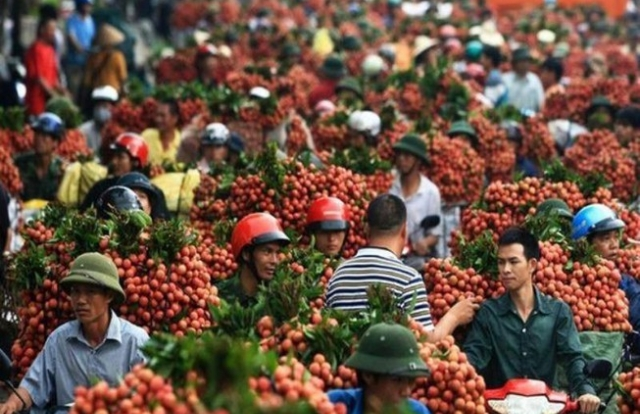 Trung Quốc tăng mua trở lại trái cây Việt Nam