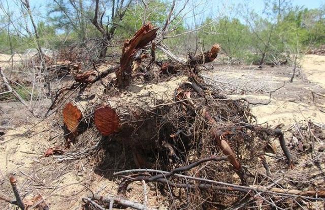 Chủ đầu tư nói gì về việc xâm phạm rừng phòng hộ ngoài dự án ở Bình Định?