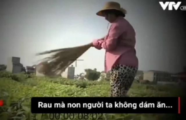 Xôn xao clip nông dân dùng chổi quét lên rau giả sâu ăn cho dễ bán