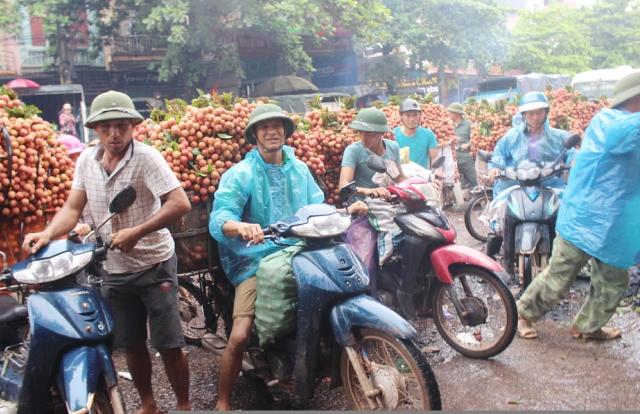 Lục Ngạn - Bắc Giang: Sắc đỏ, mầu của may mắn trên đất vải thiều