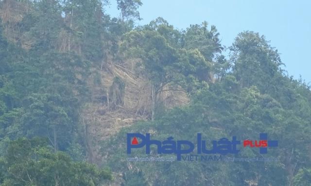 """Tuyên Quang: Những """"mưu mô chước quỷ"""" của lâm tặc nhằm tàn phá rừng đầu nguồn"""
