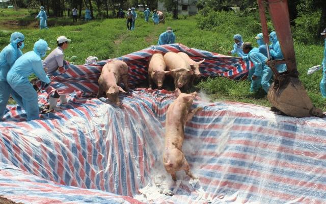 Slide - Điểm tin thị trường: Việt Nam thiệt hại khoảng 3.600 tỷ đồng do dịch tả lợn châu Phi