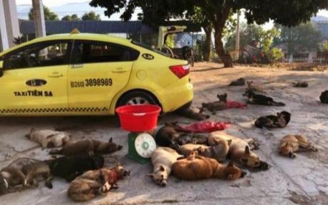 Kon Tum: Bắt quả tang đối tượng đưa chó trộm được lên xe taxi