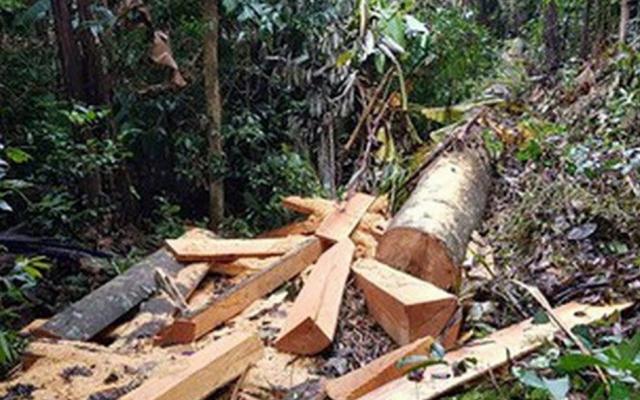 Đắk Lắk: Vào rừng cưa gỗ bán lấy tiền tiêu xài, 13 thanh niên bị truy tố