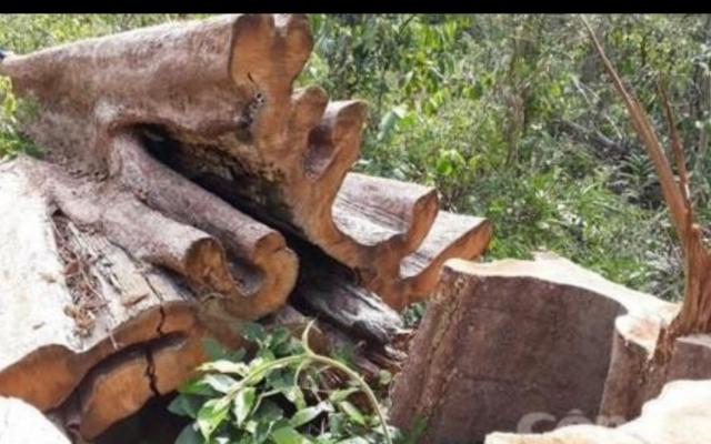 Đắk Lắk: Phát hiện 35 hộp gỗ lậu tập kết trái phép ở khe suối
