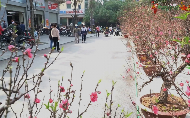Bản tin Tết Việt 2021: Ảnh hưởng Covid-19 thị trường cây cảnh ảm đạm, rau sạch lên ngôi