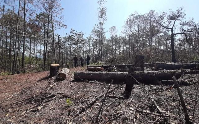 Lâm Đồng: Phá rừng trái phép, người đàn ông bị phạt gần 90 triệu đồng