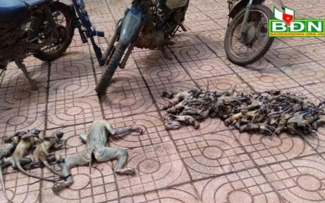 Đắk Nông: Tạm giữ 3 đối tượng săn bắn thú rừng trái phép