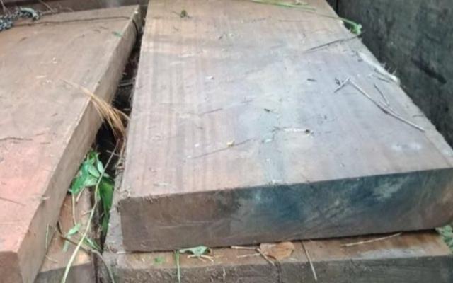 Kon Tum: Khởi tố vụ cưa hạ gỗ cổ thụ trái phép tại huyện Tu Mơ Rông