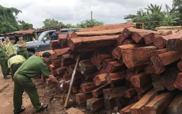 Truy tố 7 bị can mua bán gần 1.400m3 gỗ không rõ nguồn gốc xuất xứ ở Gia Lai