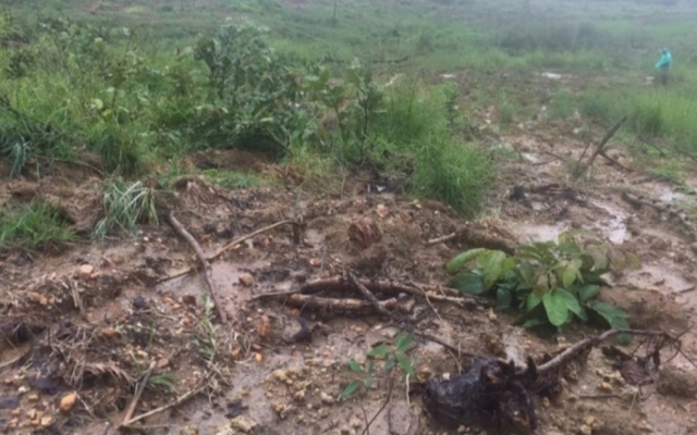 Gia Lai: Ngang nhiên san ủi hơn 34 ha đất rừng để trồng bạch đàn trái phép