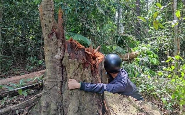 Hai nhân viên bảo vệ rừng bị khởi tố vì để mất rừng