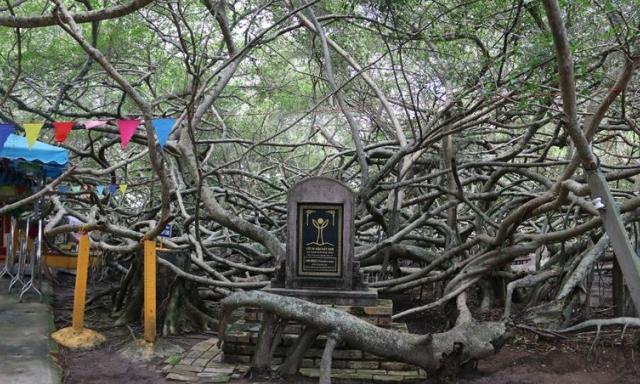 """""""Mê cung"""" Giàn Gừa nổi tiếng miền Tây"""