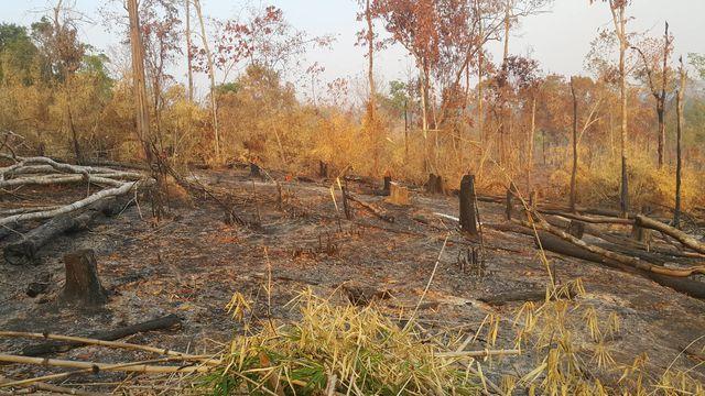 Gia Lai: Ban quản lý rừng Đức Cơ để mất hơn 9.000ha rừng