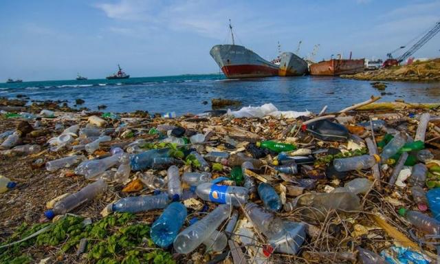 Cảnh báo các mối nguy với sinh vật biển
