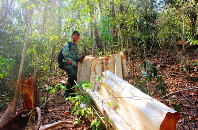 Thâm nhập điểm nóng phá rừng giáp Gia Lai - Đắk Lắk