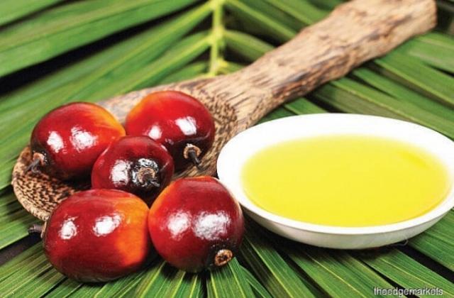 Chính phủ Thái Lan yêu cầu Egat mua dầu cọ thô nhằm hỗ trợ giá nội địa