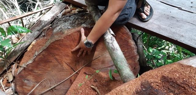 Đắk Lắk: Rừng Cư Yang bị