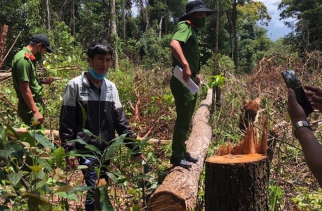 Đắk Nông: Bắt giữ 7 đối tượng chặt, phá rừng