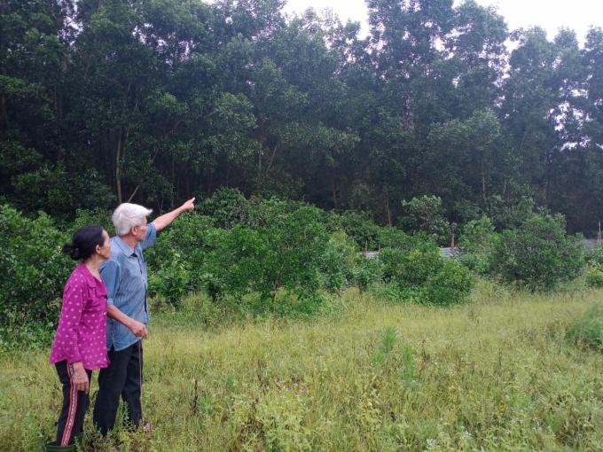 """Dân kêu cứu vụ trồng rừng gần 30 năm nguy cơ """"mất trắng"""" hơn 80.000m2 đất"""