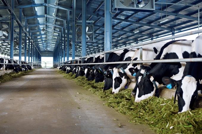 Vinamilk đưa vào hoạt động trang trại bò sữa thứ 7 tại Hà Tĩnh